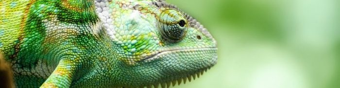 cropped-cropped-cropped-reptile-316735_960_720111.jpg