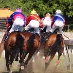 horse-racing-2357030_960_720
